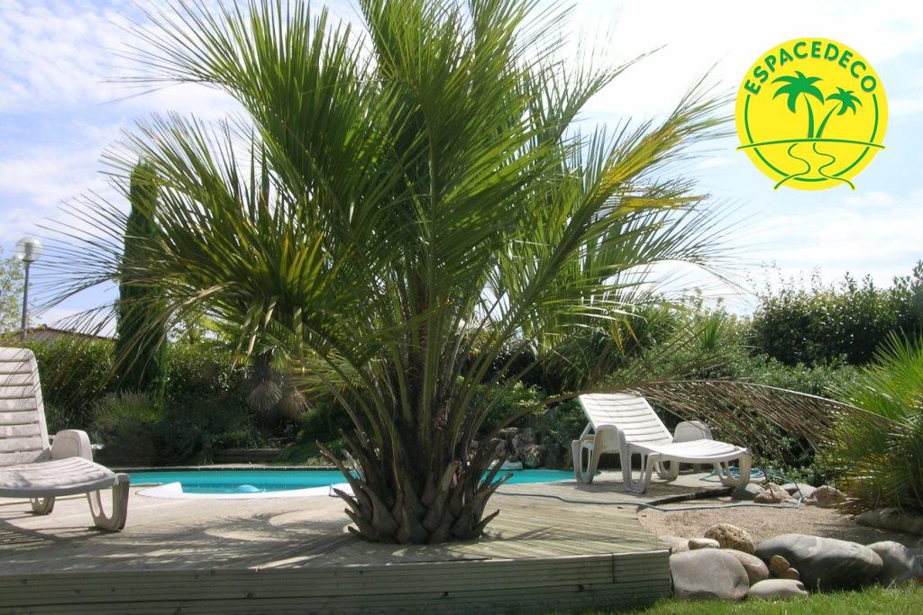 Roches, plantes méditerranéennes, nos paysagistes réalisent et aménagent vos espaces verts.